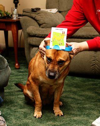 Shelby headbandz