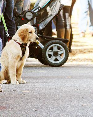 Richmond puppy
